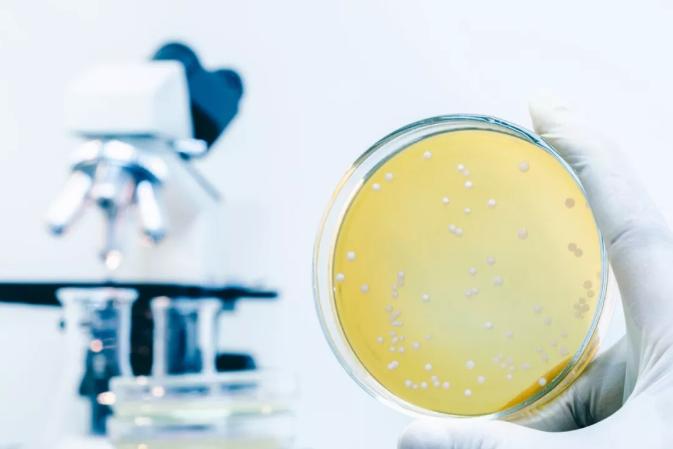 真菌靛蓝新技术,助力牛仔绿色发展!2.png